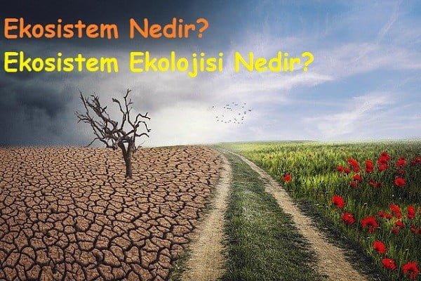Ekosistem Nedir Ekosistem Ekolojisi Nedir