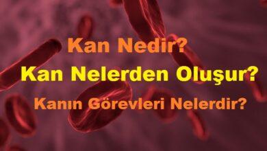 Kan Nedir Kan Nelerden Oluşur Kanın Görevleri Nelerdir