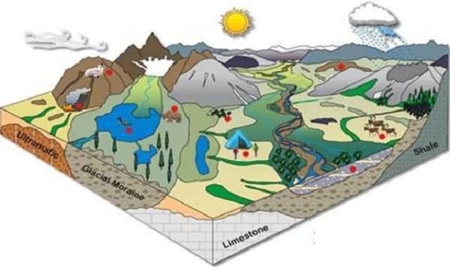 ekosistem nedir