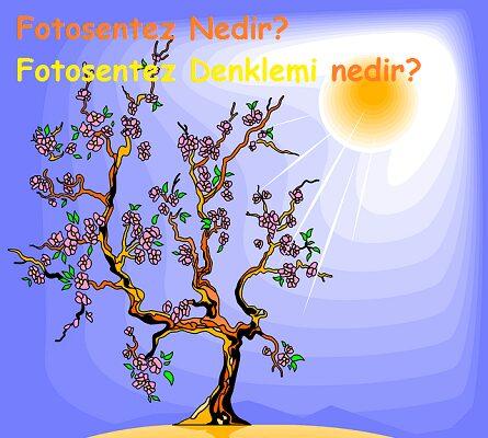 fotosentez nedir