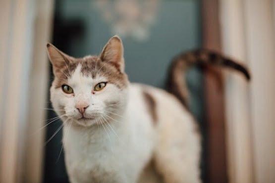 disi kedi isimleri 2