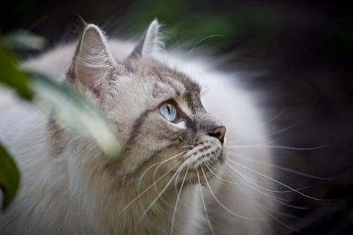 disi kedi isimleri 3