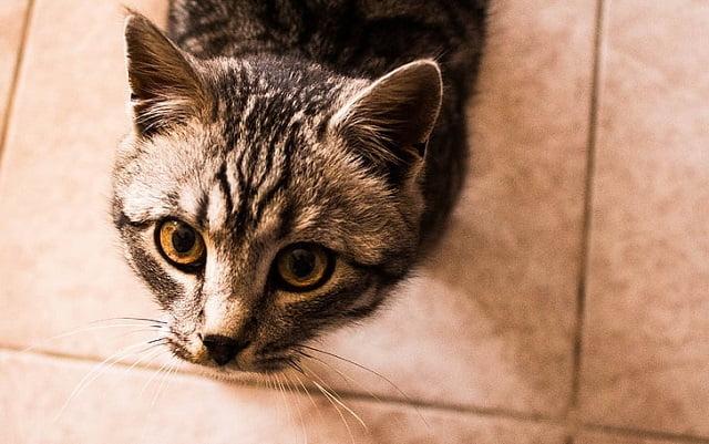 erkek kedi isimleri 2